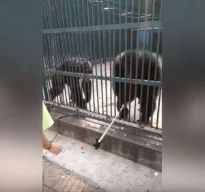 Un chimpancé le roba el palo-selfie a una niña