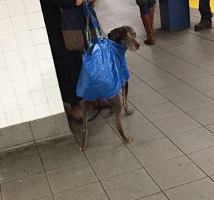 El metro de Nueva York prohíbe la entrada de perros sin transportín y los dueños reaccionan así