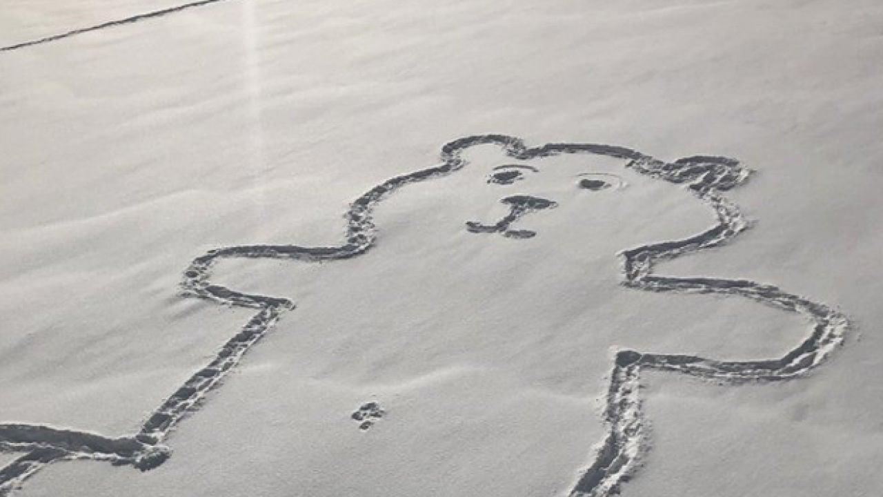 El Misterio Del Dibujo Del Oso En La Nieve: ¿cómo Han
