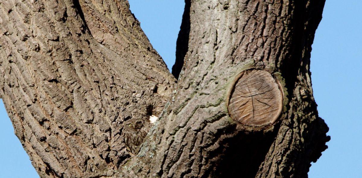 """¿Puedes ver qué animal está """"oculto"""" en este árbol?"""