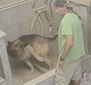 El acusado golpeando al perro
