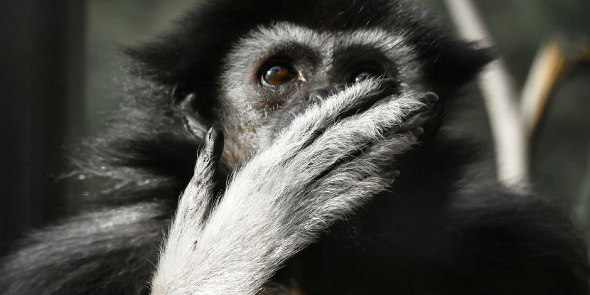 Mono sorprendido