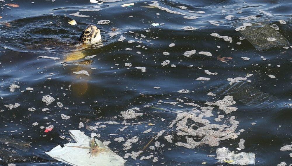 Residuos plásticos en los océanos
