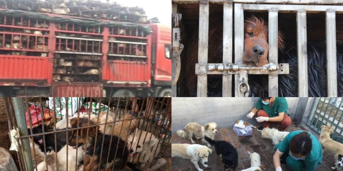 Imágenes del festival de carne de perro de China