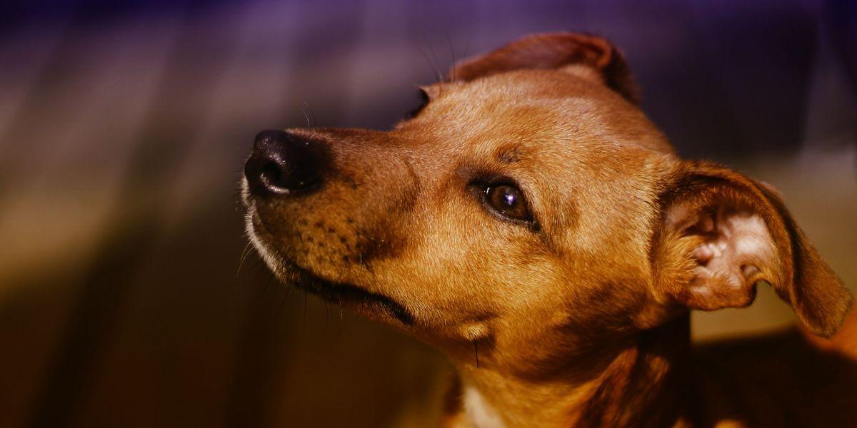 Un perro