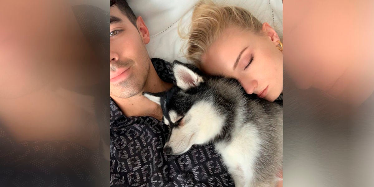 Sophie Turner y Joe Jonas con su perro Waldo