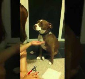 """La reacción viral de una perra cuando le van a cortar las uñas: """"la reina del drama"""""""