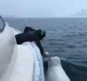 El increíble vídeo de un hombre y una beluga jugando a rugby