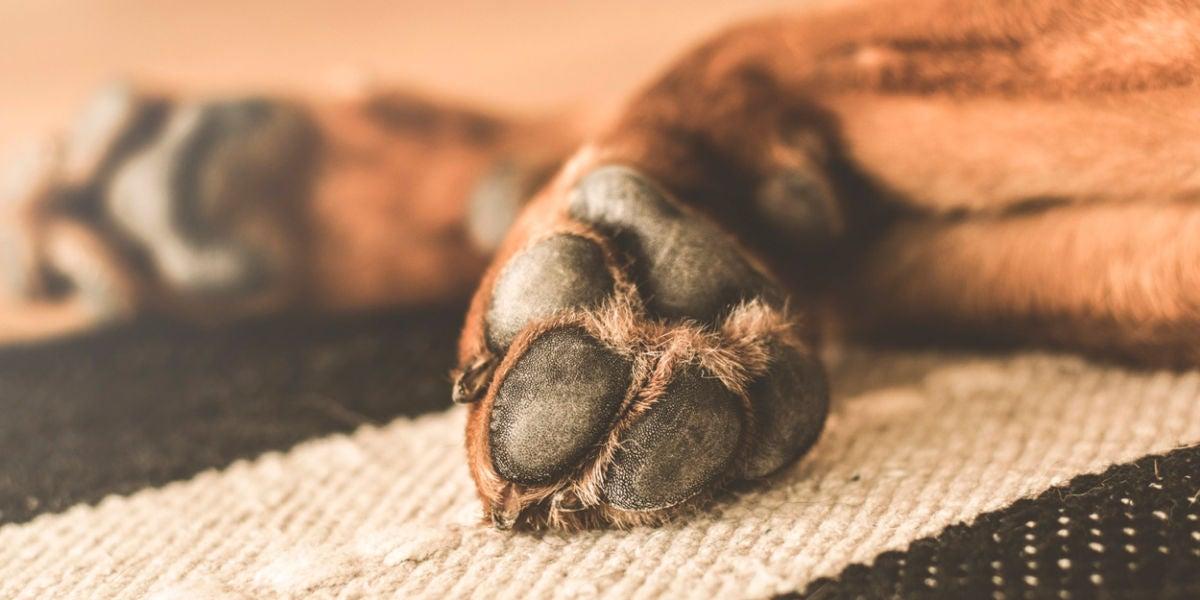 Patas de un perro