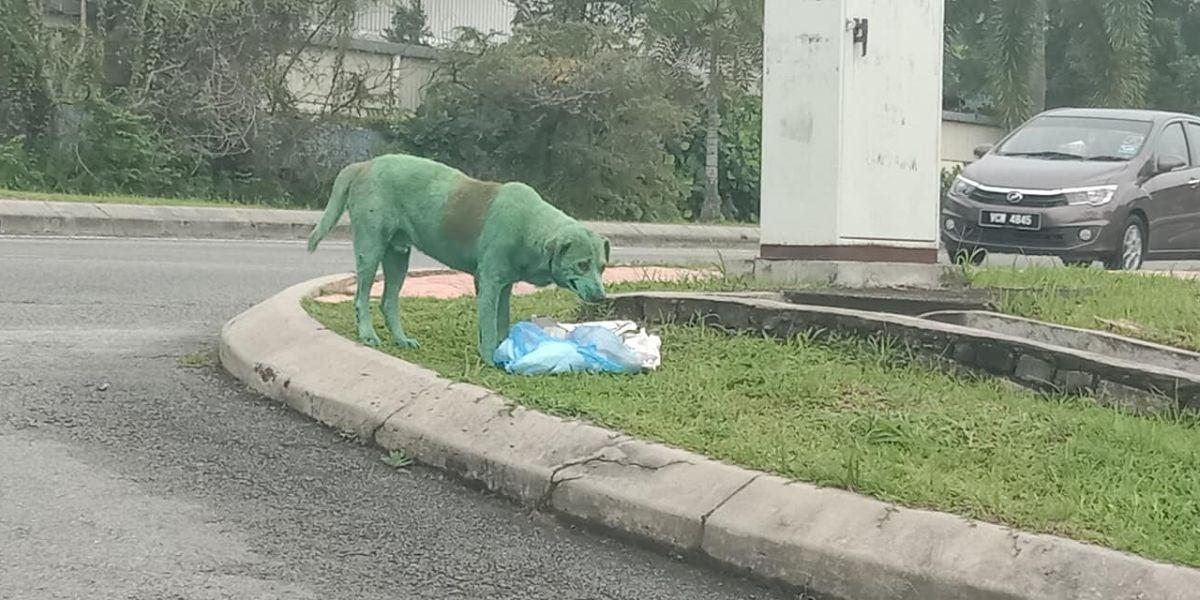 El perro pintado de verde buscando comida entre la basura