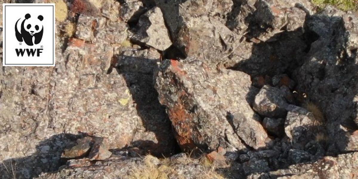 Reto Visual ¿Puedes encontrar las cuatro crías de leopardo camufladas en esta imagen?
