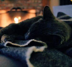 Un gato durmiendo