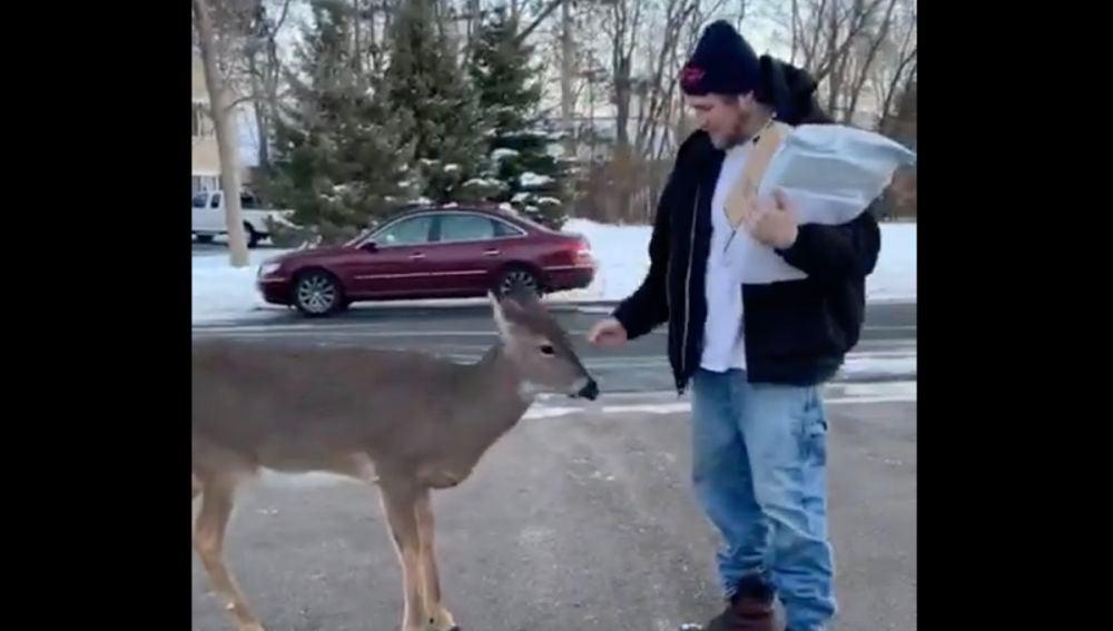 Un ciervo acercándose a un hombre para que le acaricie