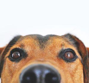un perro mira desde abajo