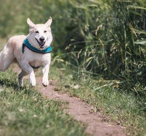 Un perro corriendo al aire libre