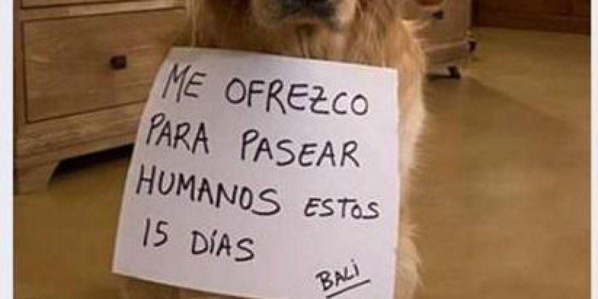 La Guardia Civil denuncia a un hombre por 'alquilar' perros para pasear