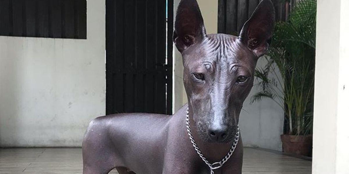El perro que se ha hecho viral por parecer una estatua