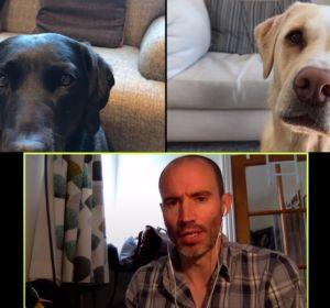Divertida videollamada 'de negocios' con sus mascotas