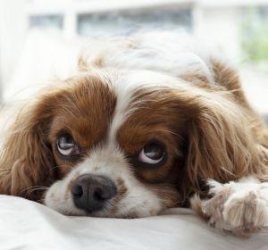 Un perro en cama