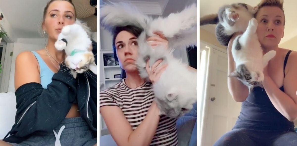 El nuevo reto viral de TikTok, no apto para amantes de sus mascotas