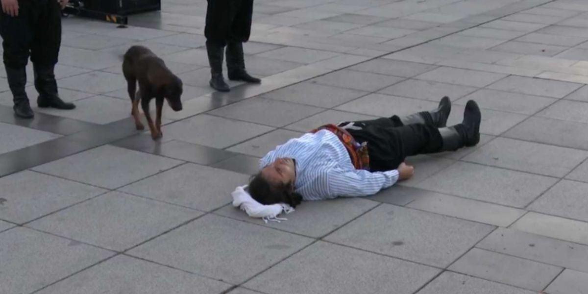 Un perro callejero irrumpe en una 'performance' para ayudar al actor que finge estar herido