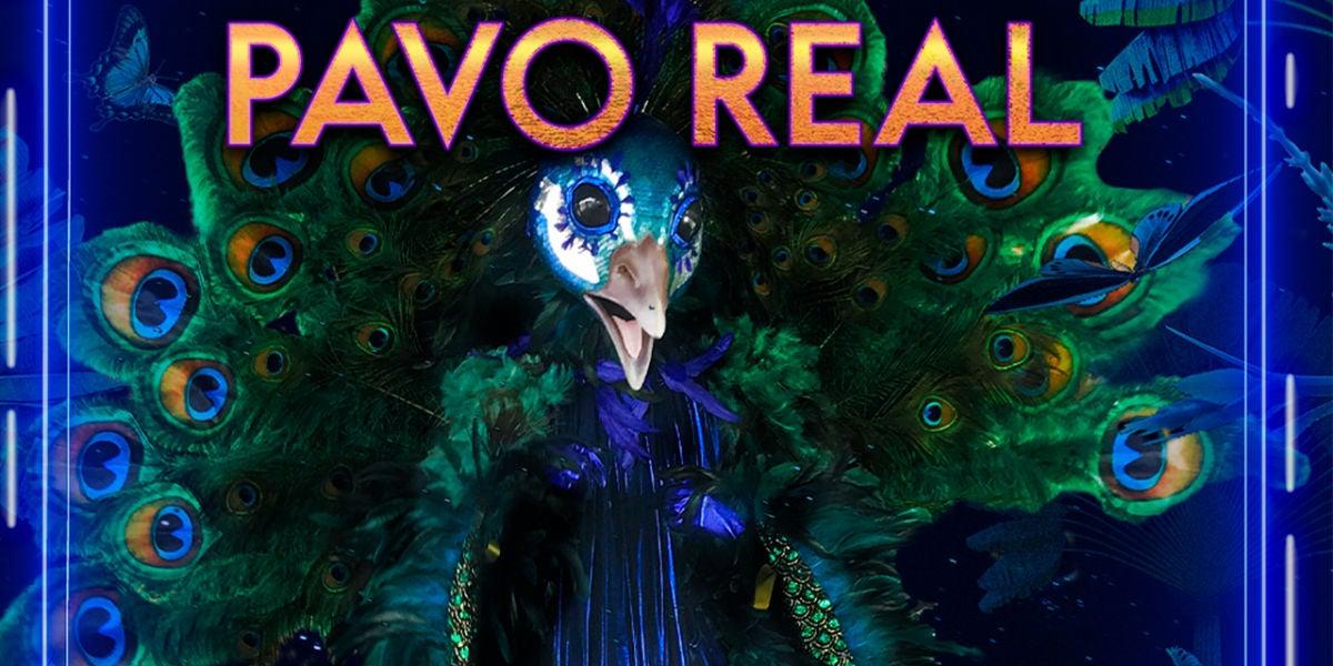 Sus impresionantes plumas y su voz de escándalo te dejarán alucinado, ¡aquí está el Pavo Real!
