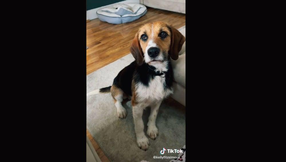 La tierna reacción de un perro abandonado tras ser adoptado que se ha hecho viral.