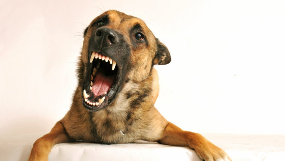 La agresividad en los perros