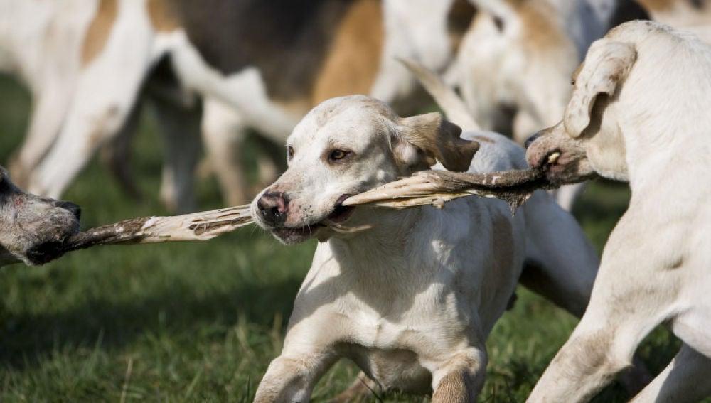 No todos los comportamientos que parecen agresivos en un perro lo son