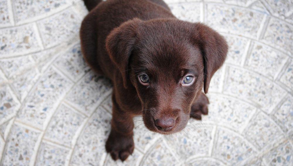 Nombres de perros más comunes en España